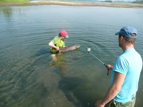 poisson chenal 2.JPG