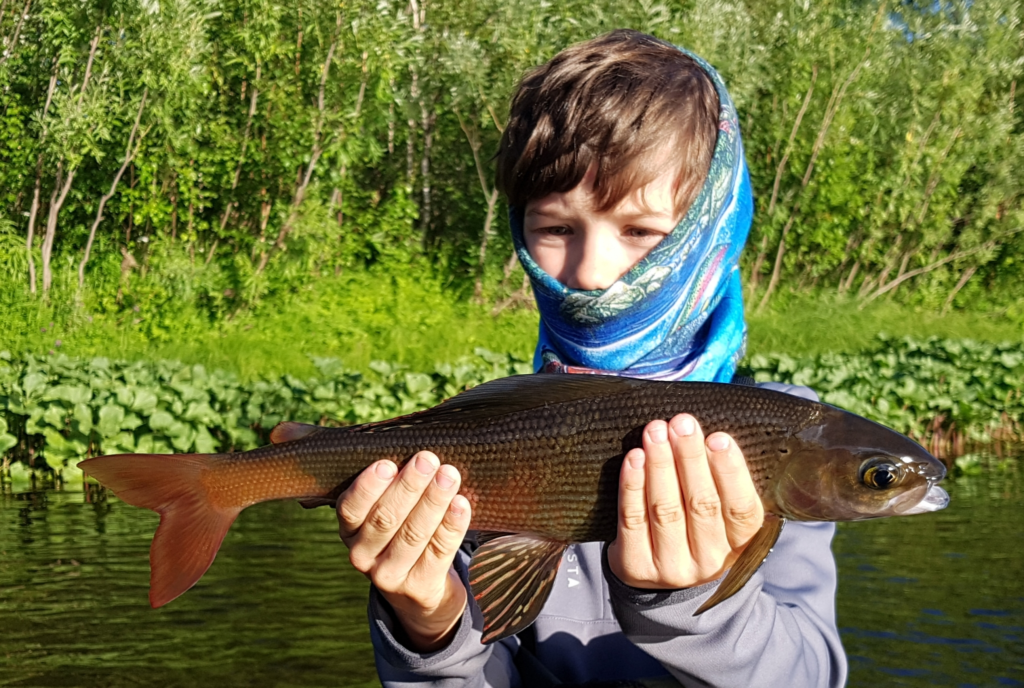 dreamfish,ken from elsass, taïmen, siberie, russie, mouche