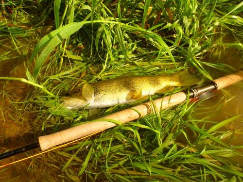 ouverture truite,alsace,pêche mouche,rhin,bruche,dreamfish,ken from elsass
