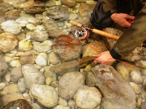 dreamfish,ken from elsass,soca,truite,mouche,pêche sportive,milieu aquatique,autriche
