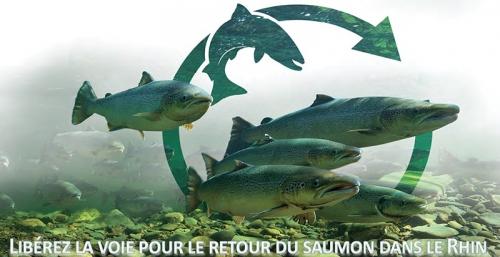 4p_salmoncomeback_fr.jpg